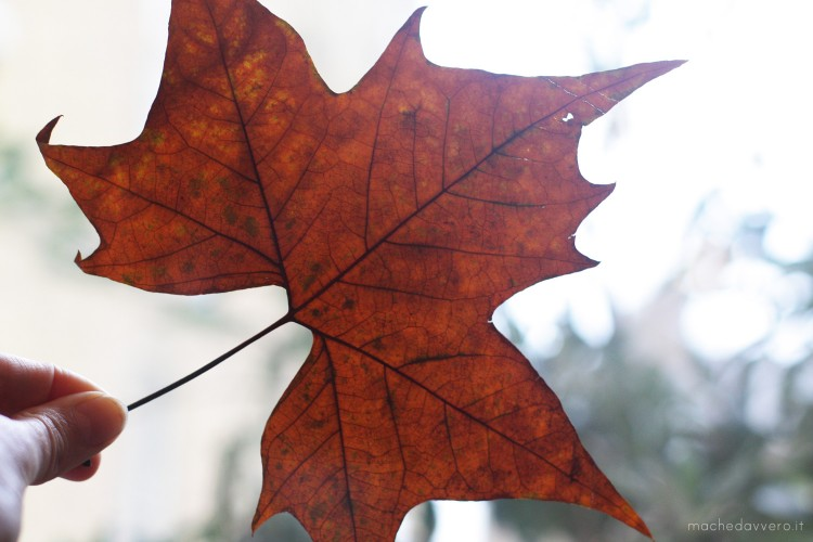 DIY autunno - Autumn leaves DIY
